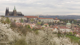 Spring Prague City with gothic Castle and the green Nature and flowering Trees, Czech Republic Stock Photography