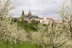 Spring Prague gothic Castle and the green Nature and flowering Trees, Czech Republic Stock Photography
