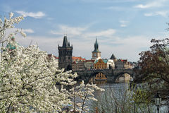 Spring in Prague. View from Vltava to the Old Town Bridge Tower Royalty Free Stock Images