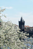 Spring in Prague. View from Vltava to the Old Town Bridge Tower. The famous Charles Bridge The Old Town Bridge Tower started in 1357 under the auspices of King Royalty Free Stock Photos
