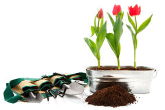 Spring Prep Royalty Free Stock Images