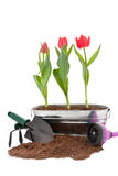 Spring Prep royalty free stock photo