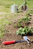 Spring preparatory work in the garden. Strawberry bushes planted along the paths on the background of blurred outlines hoes and shovels, watering cans stock image