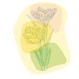 Spring primroses, delicate Crocus Stock Photo