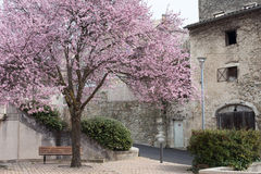 Spring in Provence Royalty Free Stock Images