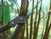 Spring pruning of treesn stock photography