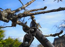 Spring pruning of treesn royalty free stock photos