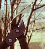 Spring pruning of treesn royalty free stock photography