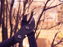 Spring pruning of treesn stock image
