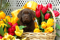 Spring Puppy op Stock Foto's
