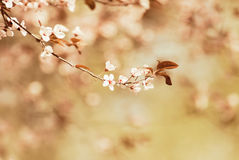 Spring royalty free stock images