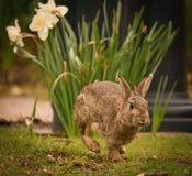 Spring Rabbit Royalty Free Stock Photo