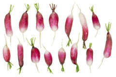 Spring radishes Stock Photography