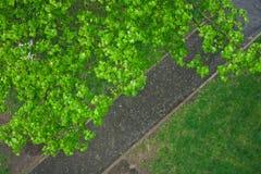 Spring rain Stock Images