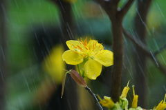 Spring rain Stock Images
