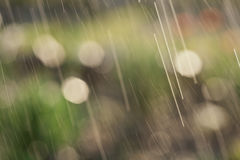 Spring rain in the garden Royalty Free Stock Image