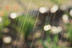 Spring rain in the garden Stock Photo