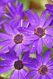 Spring rain Stock Image