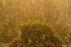Spring rain in may Royalty Free Stock Images