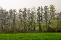 Spring rain Royalty Free Stock Photography