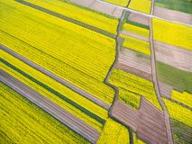 Spring rapeseed flower fields Stock Images
