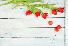Spring with Red tulips background Stock Photo