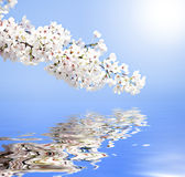 Spring reflections Stock Photos