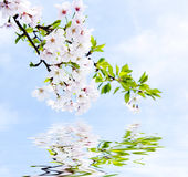 Spring reflections Royalty Free Stock Photos