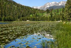 Free Spring Reflections, Cub Lake Stock Photo - 9068150