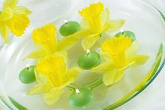 Spring Relaxation. Floating candles and daffodils Stock Images