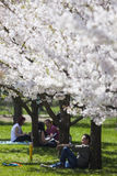 Spring relaxation Royalty Free Stock Photography