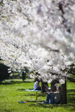 Spring relaxation Royalty Free Stock Images