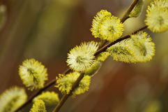 Spring revival. This image shows the new shoots of spring, trees Stock Images