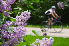 Spring ride Stock Image