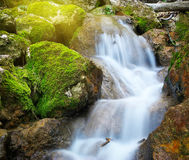 Spring rill flow. Nature composition Royalty Free Stock Photo