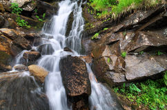 Spring rill. Flow. Nature composition Royalty Free Stock Photos
