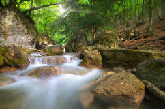 Spring rill flow. Nature composition Stock Photo