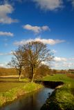 Spring river. With tree and blue sky Stock Images