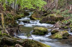 The spring river in the Carpathians. Mountain river in spring Carpathians stock images