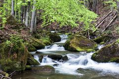 The spring river in the Carpathians. Mountain river in spring Carpathians royalty free stock images