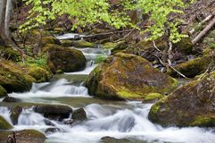 The spring river in the Carpathians. Mountain river in spring Carpathians stock image