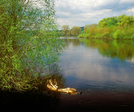 Spring river landscape. Royalty Free Stock Photos