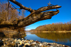 Spring River Landscape Royalty Free Stock Photography