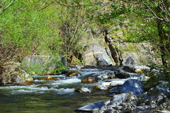 Spring river nature Stock Image