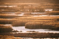 Spring River Spills And Yellow Dry Bushes And Grass In Spring Season Stock Photos