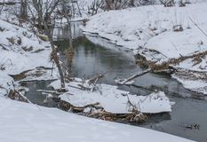 Spring river winds through the woods. The ice-free river flows through the winter forest Stock Image