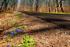 Spring  road Stock Photo