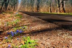 Spring Road Stock Photo