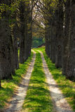 Spring road. Somethere in estonia Royalty Free Stock Photography