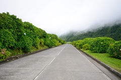 Spring Road - Azores Royalty Free Stock Image